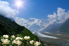 fleurit des rhododendrons de montagne Images libres de droits