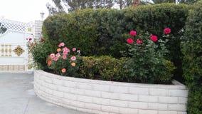 Fleurit des roses Image libre de droits