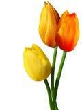 Fleurit des tulipes Photos libres de droits