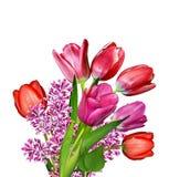 Fleurit des tulipes Images libres de droits