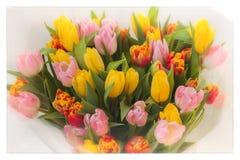Fleurit des tulipes Bouquet Bouquets colorés des tulipes Carte de voeux pour toutes les occasions, particulièrement ressort Vue s Images libres de droits