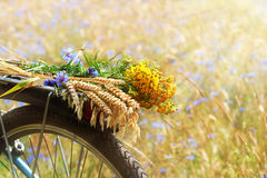 fleurit l'été Image stock