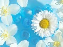 fleurit l'eau d'été Image stock