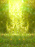 Fleurit l'herbe d'arbres Photos stock