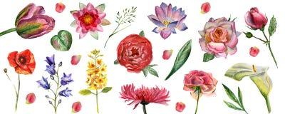 Fleurit l'illustration d'aquarelle Ensemble de fleurs d'isolement sur le fond blanc illustration libre de droits