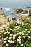 fleurit l'océan Pacifique Images stock