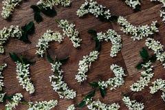 Fleurit la cerise d'oiseau sur le fond en bois Fond floral Fond en bois Photographie stock