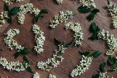 Fleurit la cerise d'oiseau sur le fond en bois Fond floral Fond en bois Photo stock