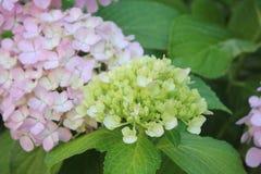 Fleurit la composition Image stock