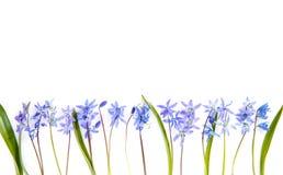 Fleurit la composition Frontière faite de fleurs roses sur le fond blanc Configuration plate, vue supérieure Images stock