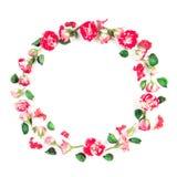 Fleurit la composition Guirlande faite de roses fraîches et fleurs sèches sur le fond blanc Configuration plate, vue supérieure Image stock