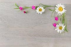 Fleurit la composition Le cadre est fait de fleurs des camomilles a Photo libre de droits