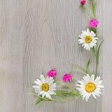 Fleurit la composition Le cadre est fait de fleurs des camomilles a Photographie stock libre de droits