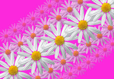 Fleurit la composition linéaire Photos stock