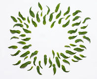 Fleurit la composition Vue faite de feuilles de vert d'isolement sur le blanc Configuration plate, vue supérieure Photo stock