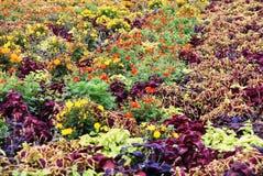 Fleurit la couleur pourpre Photo libre de droits