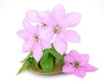 Fleurit la décoration dans la cuvette Images stock