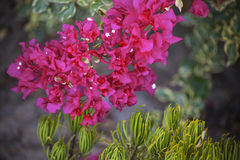 Fleurit la lumière naturelle Photographie stock libre de droits