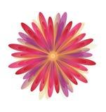 Fleurit la marguerite du rouge Image libre de droits