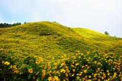 Fleurit la montagne Photos stock