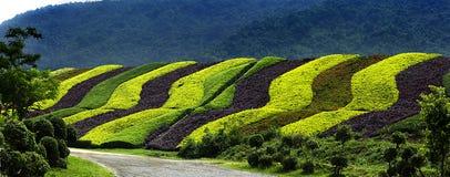Fleurit la plantation. Photo libre de droits