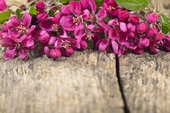 Fleurit la pomme décorative Image stock