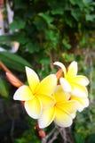 Fleurit la Thaïlande Photographie stock libre de droits
