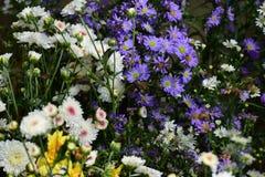 Fleurit la variété Photo stock
