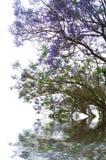 fleurit la violette Image stock