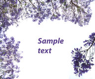fleurit la violette de cadre Photographie stock