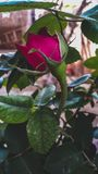 Fleurit le 🌷 photo stock