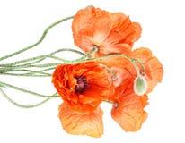 Fleurit le bouguet - pavots photographie stock libre de droits
