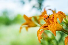 Fleurit le champ de sud d'été Images stock