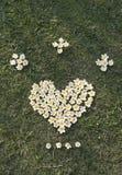 Fleurit le coeur Image libre de droits