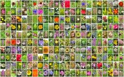 Fleurit le collage image libre de droits