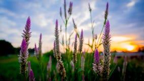 Fleurit le coucher du soleil Image libre de droits