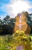 Fleurit le feuillage de crête d'arbre Image libre de droits