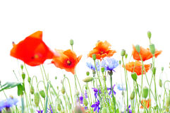 fleurit le fond de nature Photo stock