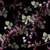 Fleurit le haricot de l'aquarelle Modèle sans couture floral sur un fond noir image stock