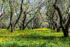 Fleurit le jardin de pommier Photographie stock libre de droits