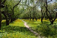 Fleurit le jardin de pommier Images stock