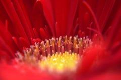Fleurit le macro Image libre de droits