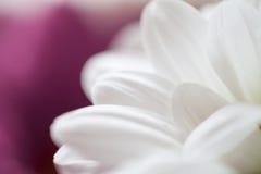Fleurit le macro fond coloré Images stock
