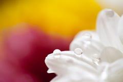 Fleurit le macro fond coloré Photographie stock libre de droits