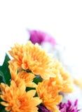 Fleurit le macro fond coloré Image libre de droits