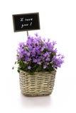 Fleurit le panier Image libre de droits