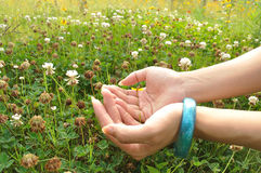 Fleurit le protecteur Photo libre de droits