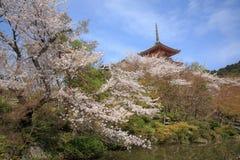 Fleurit le ressort de Sakura Images stock