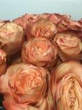 Fleurit le rose de roses image libre de droits