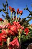 fleurit le rouge Photographie stock libre de droits